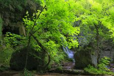 Free Beautiful Forest Scenery Royalty Free Stock Photography - 24650227