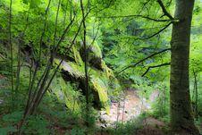 Free Beautiful Forest Scenery Stock Photo - 24650230