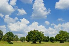 Free Tree And Blue Sky Royalty Free Stock Images - 24652309