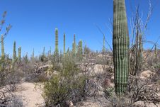 Free Saguaro National Park West Stock Image - 24653021