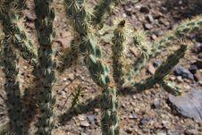 Free Cactus Closeup Stock Image - 24653031
