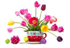 Free Colorful Tulips Royalty Free Stock Photos - 24653948