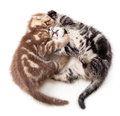 Free Two Kittens Struggle Top View Stock Images - 24660614