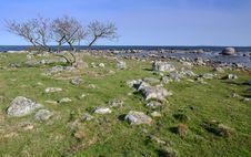 Free Wild Swedish Coast Royalty Free Stock Photo - 24660845