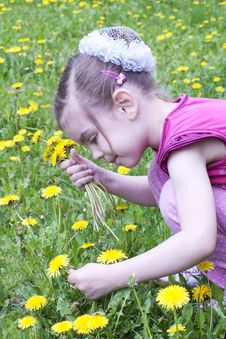 Free Young Girl In A Field Of Dandelions Stock Image - 24661981