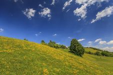Free Beautiful Country Meadow With Deep Blue Sky Stock Images - 24664134