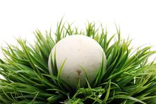 Free Soap For Bath In Grass Royalty Free Stock Photo - 24670985
