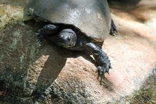 Free Turtle Stock Photo - 24680940