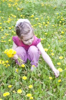 Free Young Girl In A Field Of Dandelions Royalty Free Stock Photography - 24685347