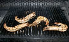 Free Grilled Shrimp Royalty Free Stock Images - 24687209