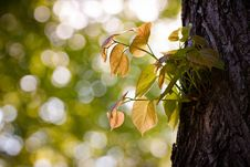 Free Leaves On The Tree Stock Photo - 24688190