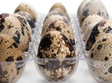 Free Quail Eggs Close-up. Stock Images - 24689234