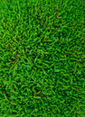 Free Moss Texture Royalty Free Stock Images - 24699739