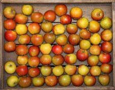 Free Freshly Picked Apples. Royalty Free Stock Photos - 24693348