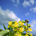 Free Bee On Flowers Royalty Free Stock Image - 2470746