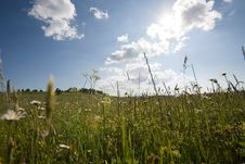 Free Springtime! Blue Sky & Meadow Stock Photo - 2471440