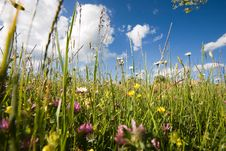 Free Amidst Meadow And Blue Sky Royalty Free Stock Images - 2471459