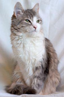 Free Cat2 Stock Image - 2471621