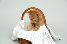 Free Kitten And Basket Stock Photography - 2471932