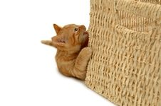 Free Cat Royalty Free Stock Images - 2471939