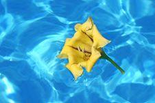 Yellow Hibiscus Stock Photography