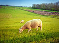 Free Dutch Farm By Spring Stock Images - 24700704