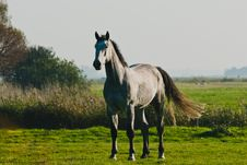 Free Horses Stock Images - 24700264