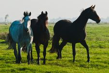 Free Horses Stock Images - 24700284
