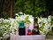 Free Aromatherapy Stock Photos - 24704743