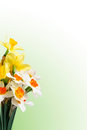 Free Floral Background-04 Stock Image - 24710821