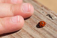 Free Spring Ladybug Stock Photos - 24710893