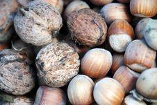 Free Walnuts And Hazelnuts Stock Photography - 24729012