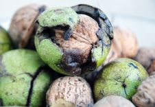 Free Green Walnuts Royalty Free Stock Photos - 24729018
