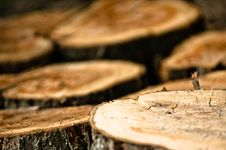 Free Tree Trunk Slices Stock Photo - 24730500