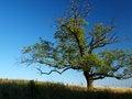 Free Tree Stock Image - 24744541
