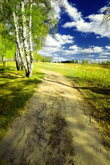 Free Forest Birch Stock Photos - 24741933