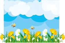 Free Summer Meadow Royalty Free Stock Image - 24744076
