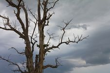 Free Cloudy With A Dead Tree. Stock Images - 24745414