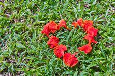 Heart Shape Of Peacock Flower Petals