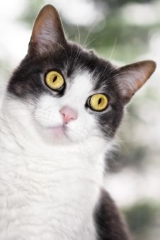Free Peeking Grey And White Cat Stock Photo - 24748260