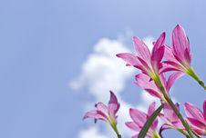 Free Flowers Stock Photos - 24749003
