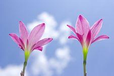 Free Flowers Stock Photo - 24749050