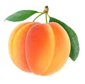 Free Apricots Stock Image - 24753551