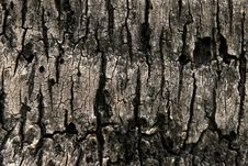 Free Bark Moss Texture Royalty Free Stock Images - 24759889