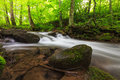 Free Vibrant Green Foliage And Stream In The Forest Royalty Free Stock Photo - 24760345