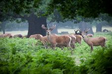 Free Deer Herd In A Forest Stock Image - 24762921