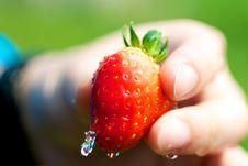 Free Washing Strawberry Royalty Free Stock Images - 24763929