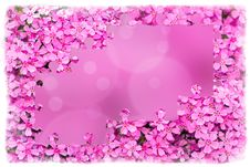Free Pink Flower Frame With Puzzle Of Flowers Stock Photos - 24765223