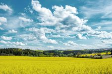 Free Beautiful Summer Rural Landscape Royalty Free Stock Photo - 24765225