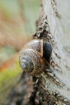 Free Closeup Of A Snail Royalty Free Stock Photo - 24769515